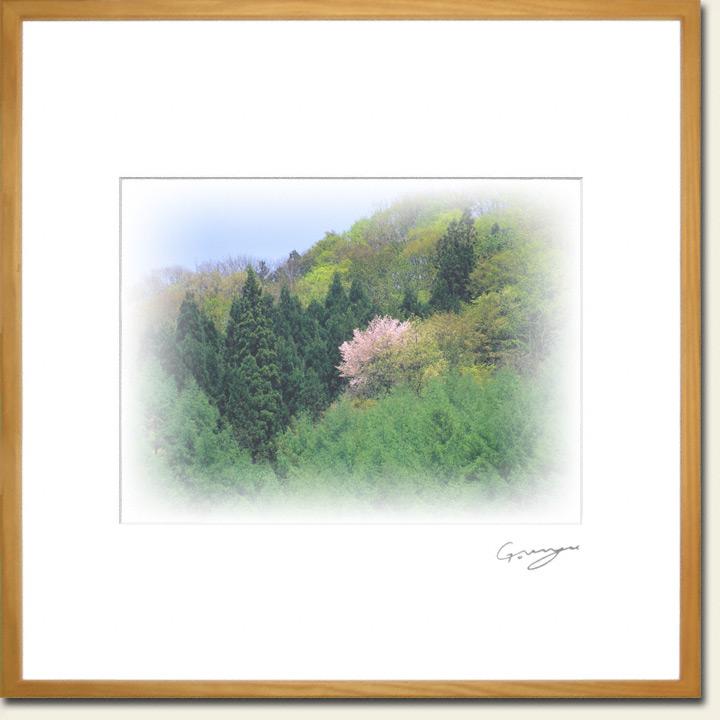 青空と新緑の山の山桜