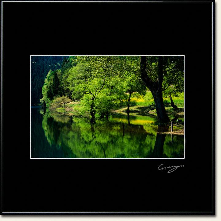 湖面に映る新緑と菜の花と黒い幹