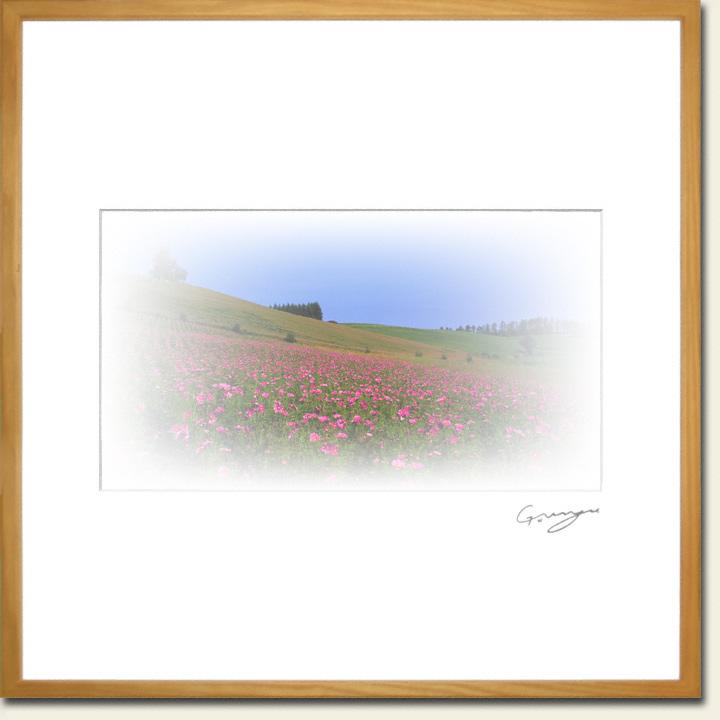 カラマツの丘と赤いコスモス畑