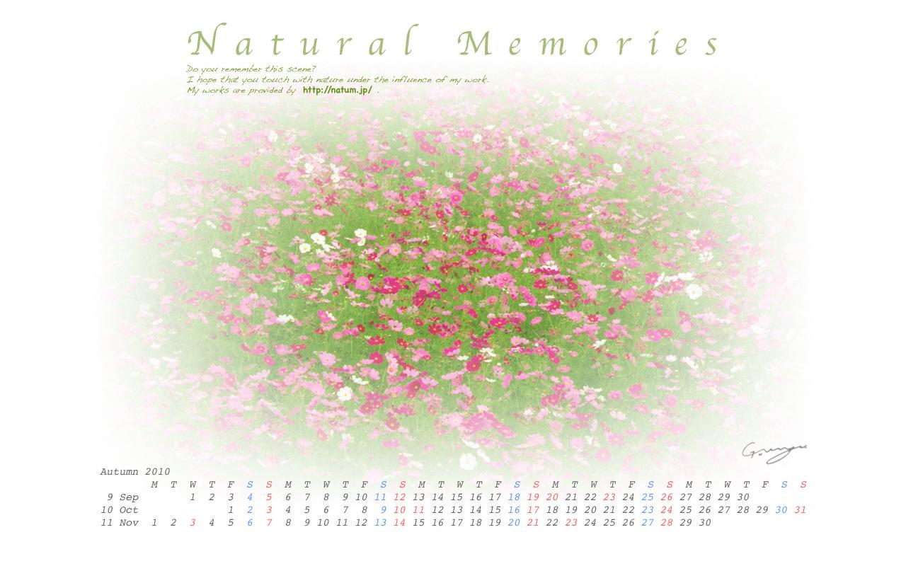 2010年秋(9月〜11月)カレンダー 〜コスモス畑〜
