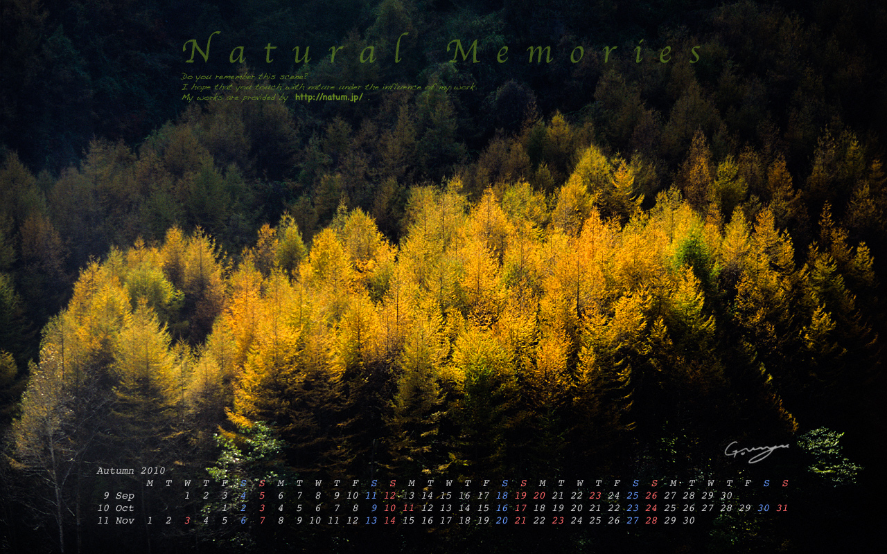 2010年秋(9月〜11月)カレンダー 〜輝く黄葉のカラマツ林〜
