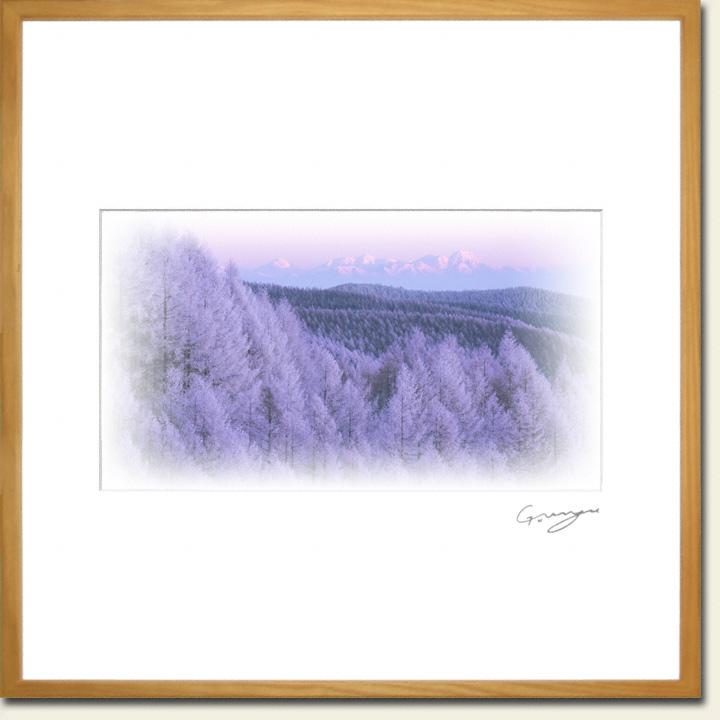 カラマツの樹氷と朝日の当たる北信の山々