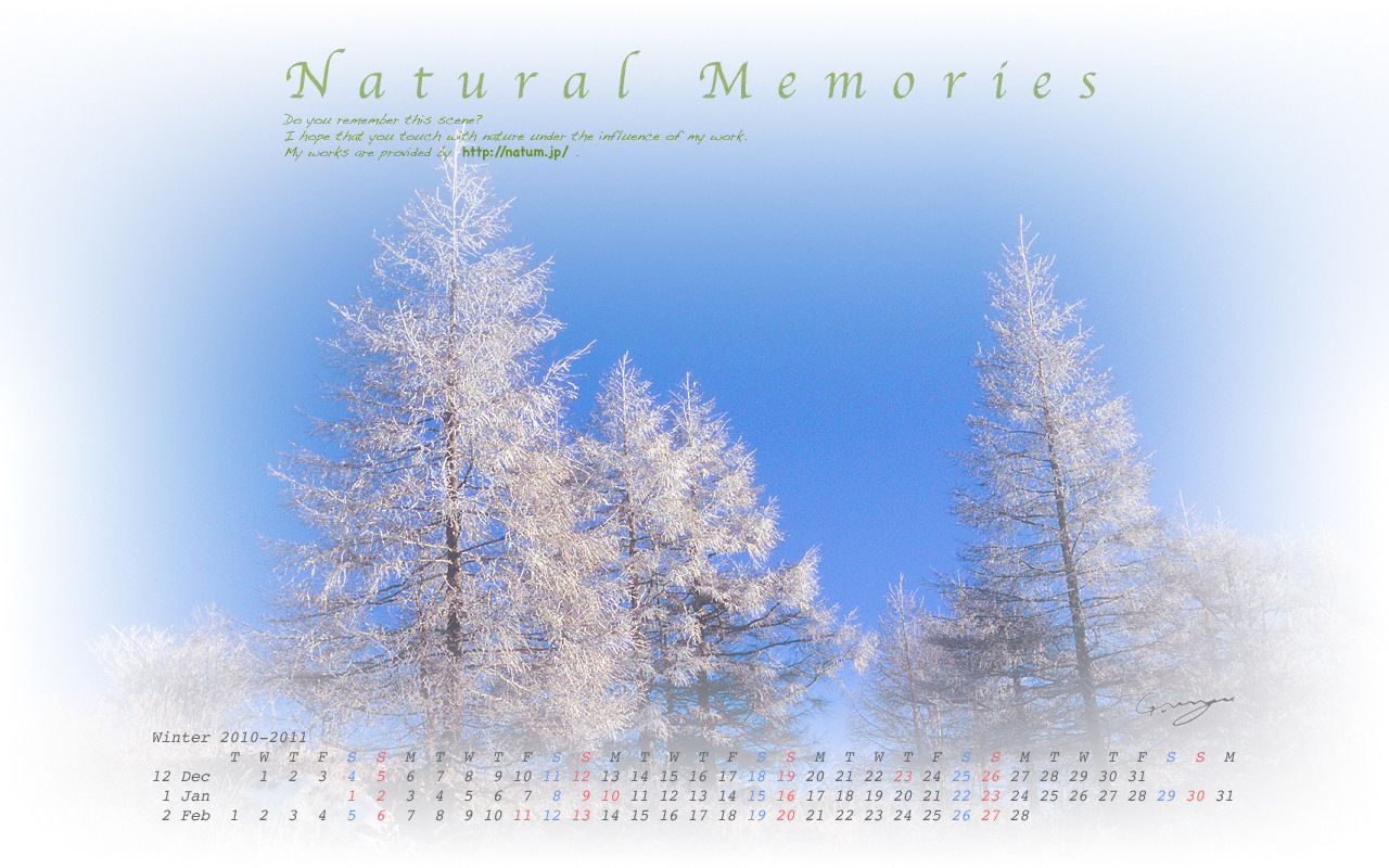 2011冬-青空と山頂のカラマツの霧氷(1280 x 800)