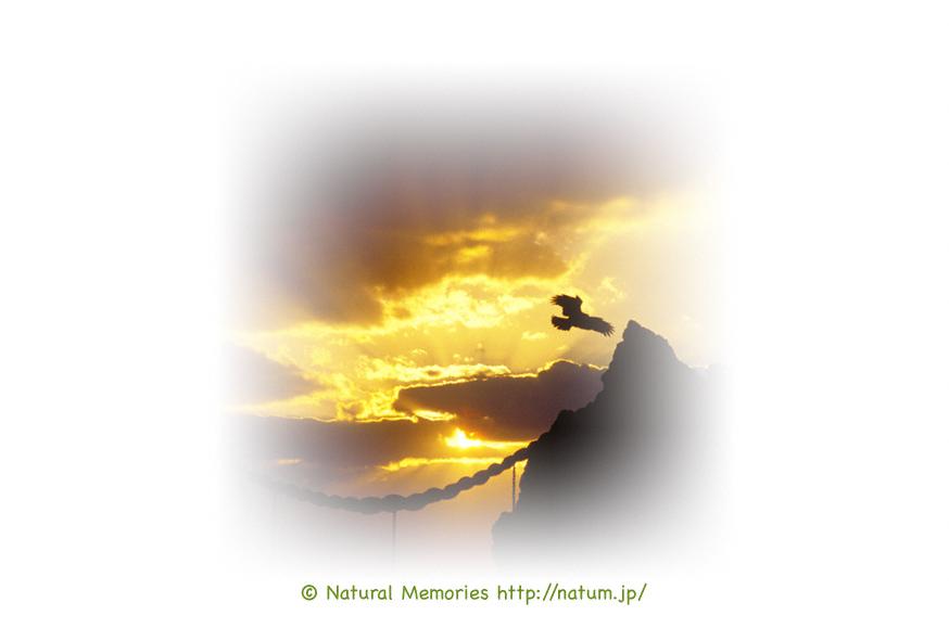 保護中: 雲間の太陽と鳥居
