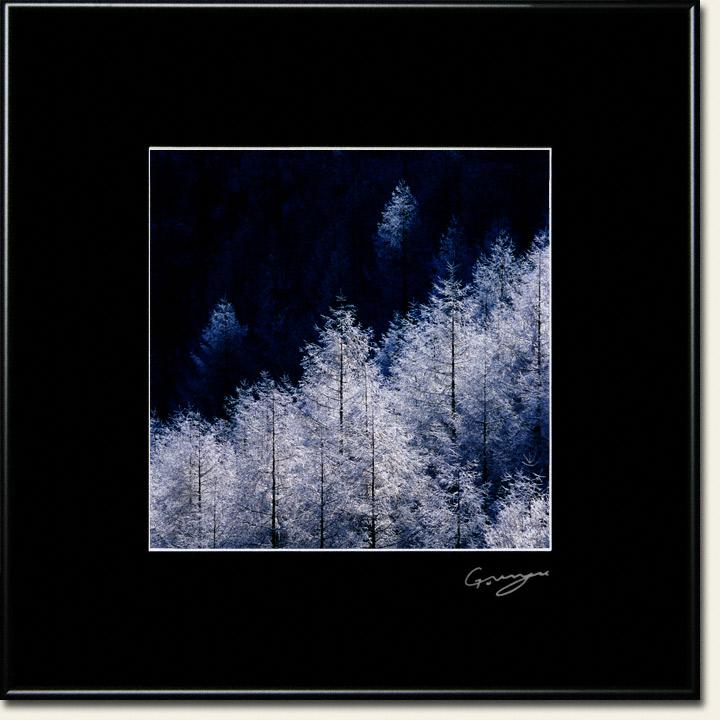 漆黒に輝くカラマツの樹氷林