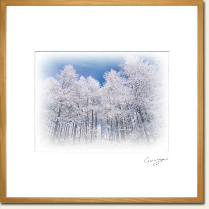 青空と斜面を見上げるカラマツの樹氷林