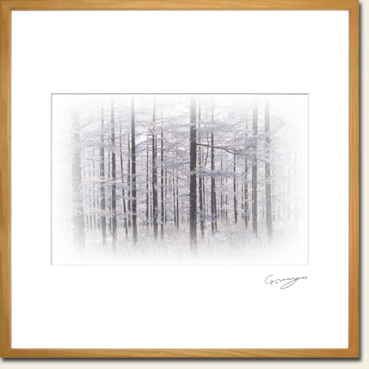 カラマツ林の中の樹氷