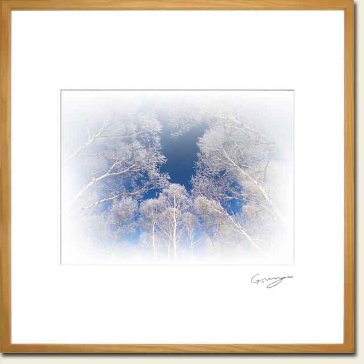 青空を埋める樹氷の白樺林