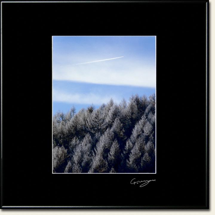 カラマツの樹氷と飛行機雲