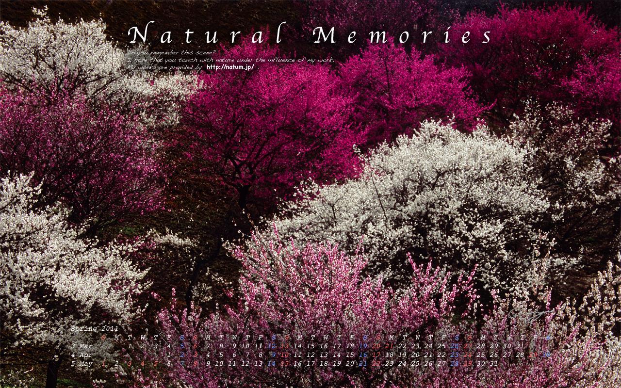 2011春(3月4月5月)カレンダー【連なる紅白桃色の梅】