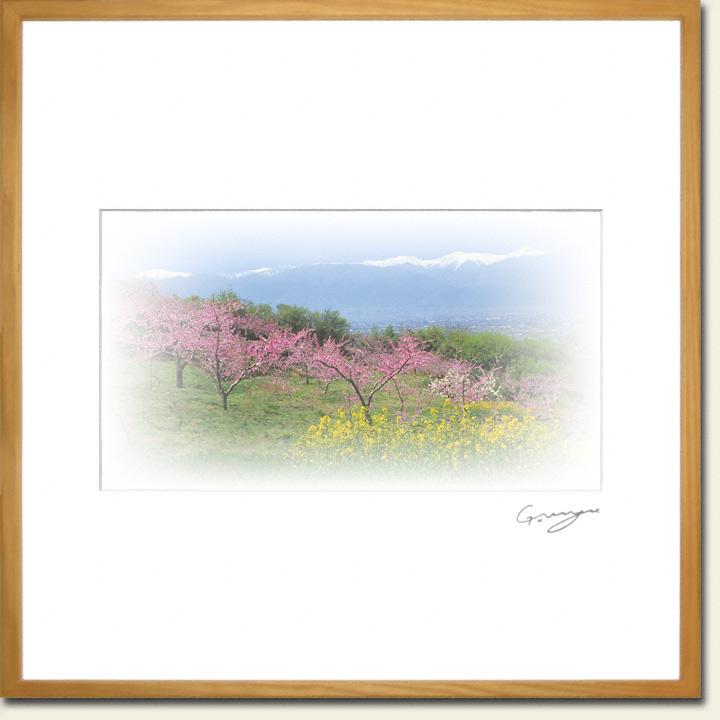 残雪の南アルプスと桃の花と菜の花