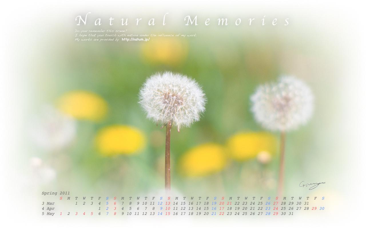 2011春(3月4月5月)カレンダー【緑と黄色の中の綿毛のタンポポ】