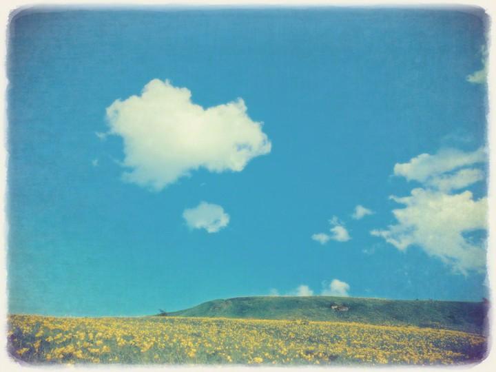 青い空と白い雲とニッコウキスゲの丘