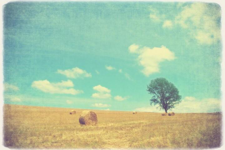 青空と牧草ロールと哲学の木