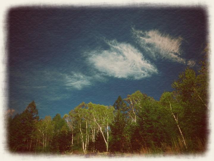 新緑の白樺と青い空と白い雲