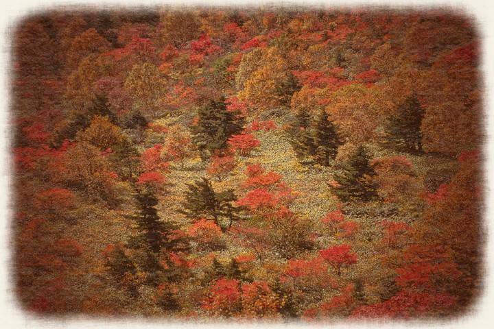 紅葉の吾妻山の天狗の庭
