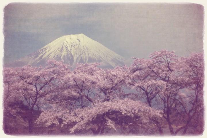 湖畔の桜と残雪の富士山