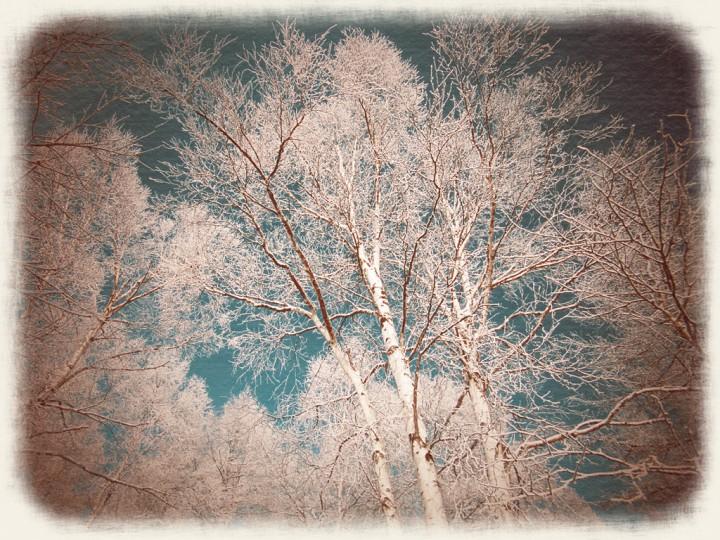 青空を埋める白樺の樹氷