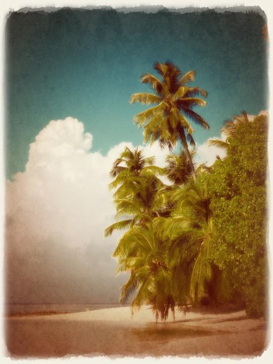 砂浜のヤシの木と入道雲