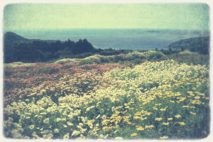 青い海と軍艦島とマーガレット畑