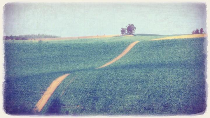 緑のうねる丘の道