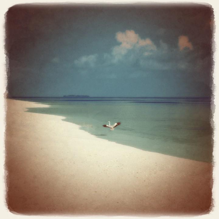 珊瑚礁の白い砂浜に舞い降りる鳥
