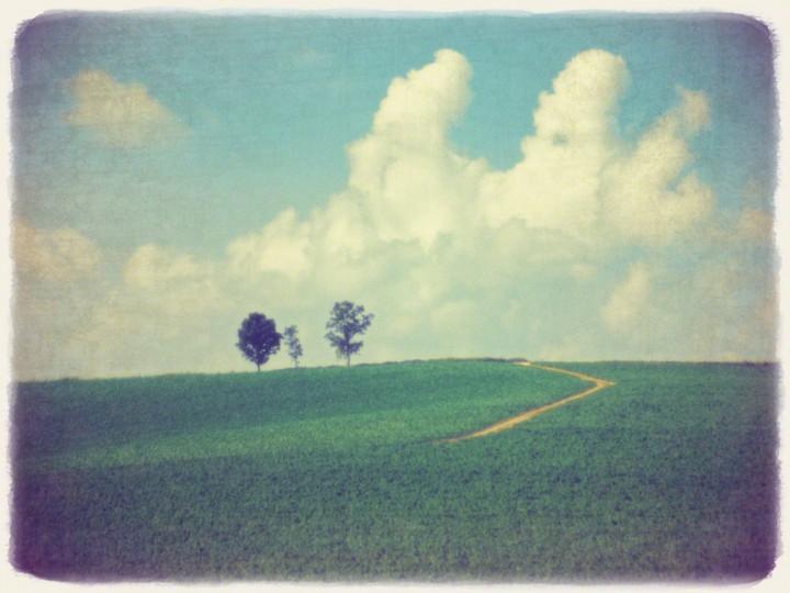 入道雲と親子の木へと続く道