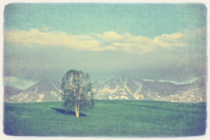 残雪の十勝岳連峰と新緑の丘の白樺