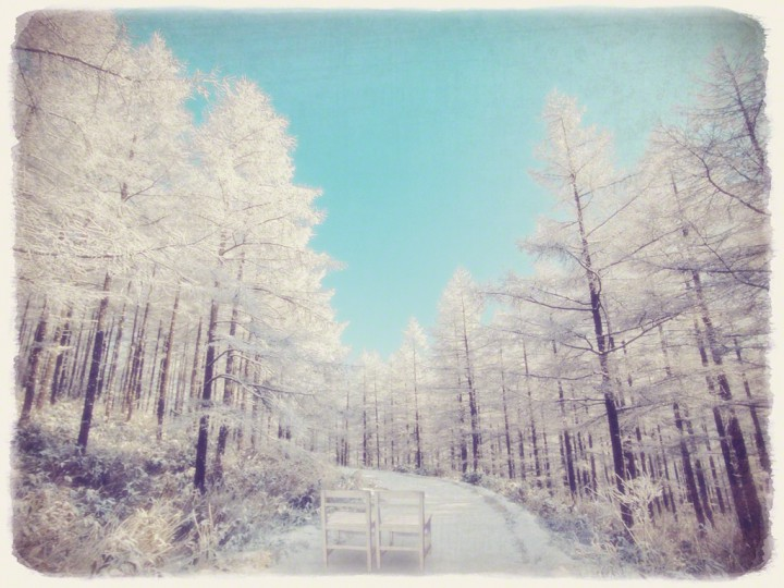 白い椅子とカラマツの樹氷の雪道