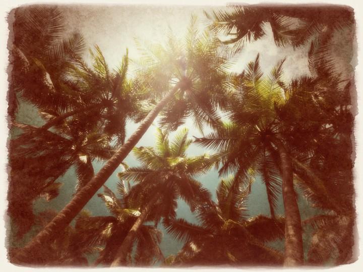 太陽と青空とヤシの木