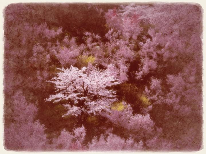 春の花木に囲まれた桜