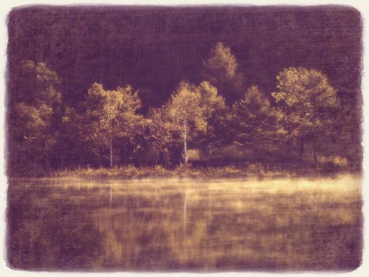 朝霧と湖面に映る輝く白樺