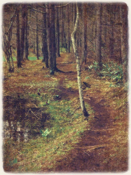 湖畔の雑木林の散歩道