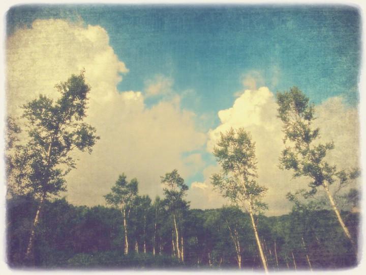 入道雲と白樺林の高原