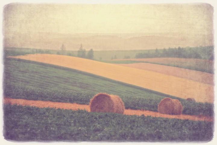 斜陽の牧草ロールとパッチワークの丘