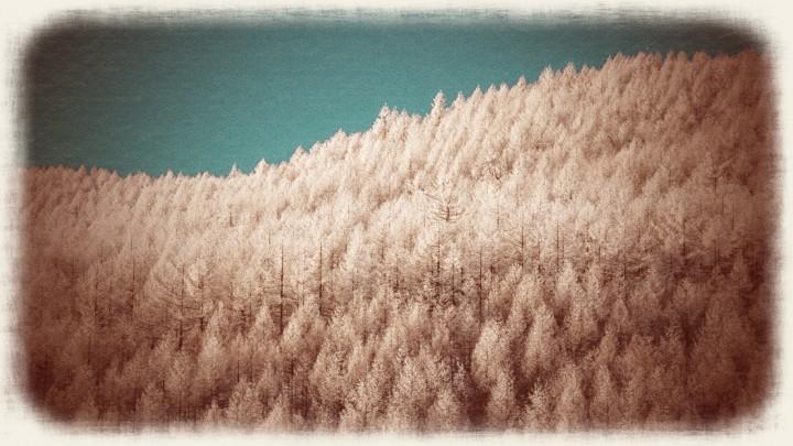 青空と一面のカラマツの樹氷の山