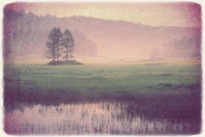 朝霧のニッコウキスゲの湿原
