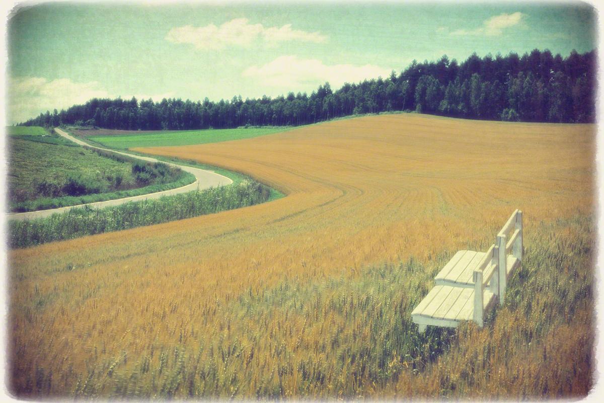 白い椅子と曲がる道と麦畑