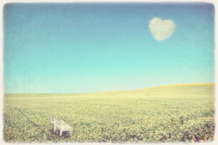 青空のハートの雲と一面のソバの花と白い椅子