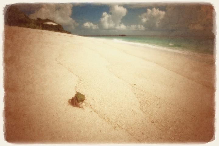 珊瑚礁の砂浜のヤドカリ