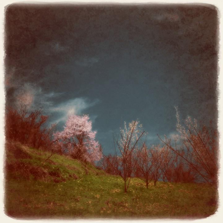 青空とタンポポと山桜