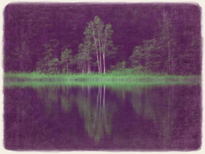 湖に映る新緑の白樺