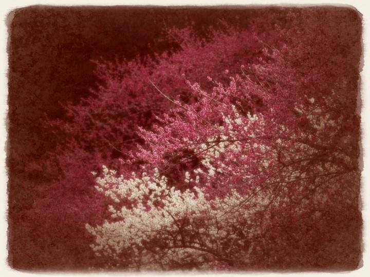 漆黒に浮かぶ紅白梅
