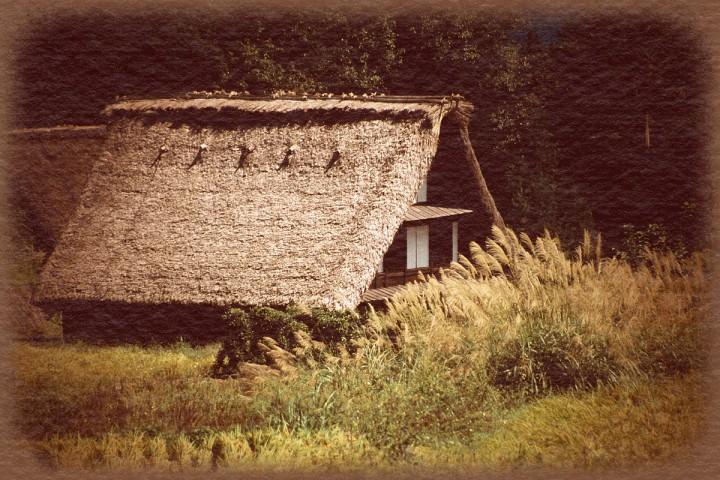 ススキと実りの田と合掌造りの屋根