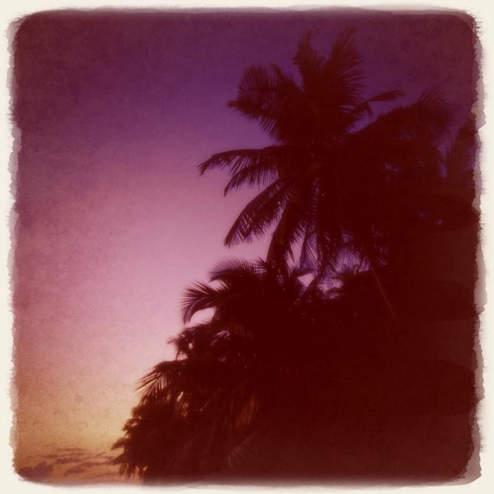 夕暮れのヤシの木