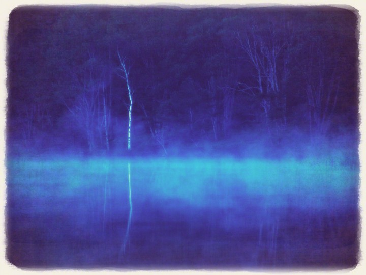 朝霧の湖に映る白樺