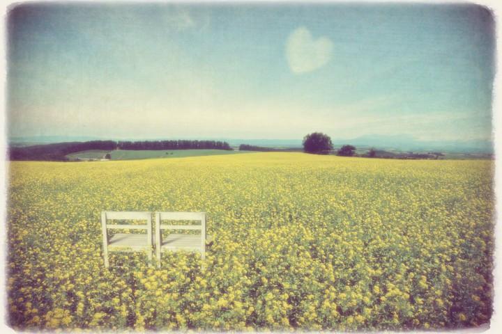 ハートの雲と地平線と菜の花畑の中の白い椅子